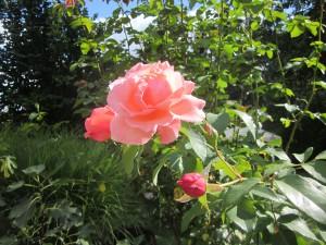 Garten Jürgens und Fotos eigener Garten 027