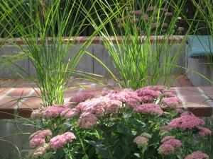 Garten Jürgens und Fotos eigener Garten 028