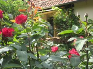 Gartenfotos und neues Zimmer 007
