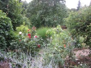 Gartenfotos und neues Zimmer 011
