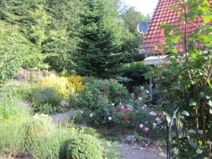 Rosenbeet an der Terrasse
