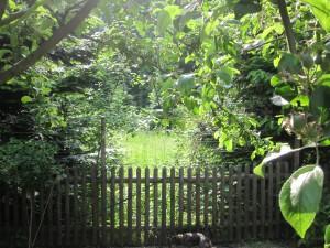 ... Eingangspforte zum Wald ....